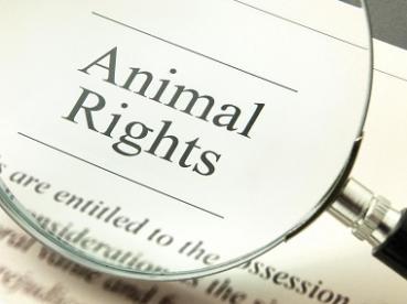 Unique en France : un diplôme universitaire en droit animalier